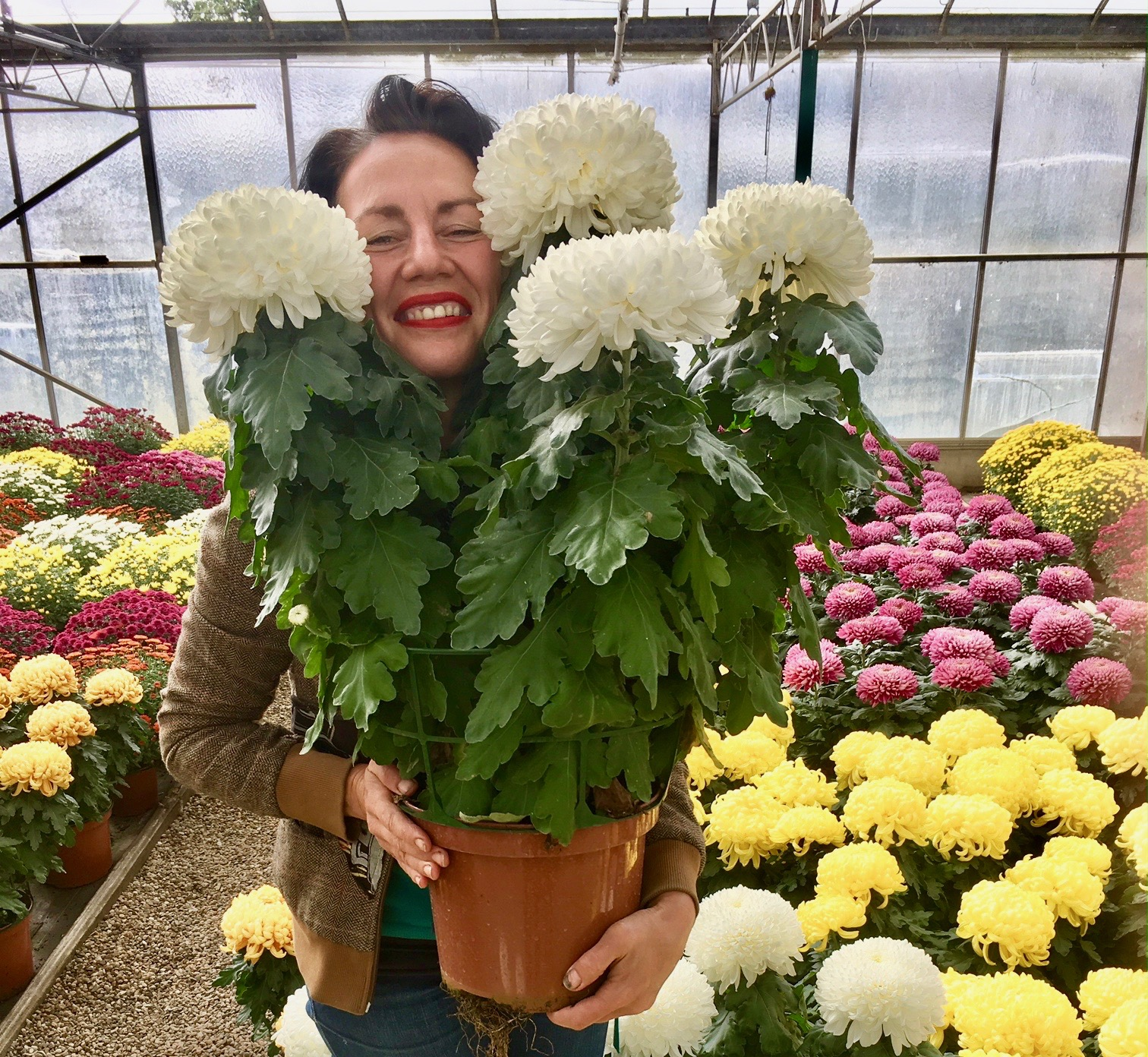 Magasin d horticulture bourran fleurs l gumes frais for Magasin de plantes