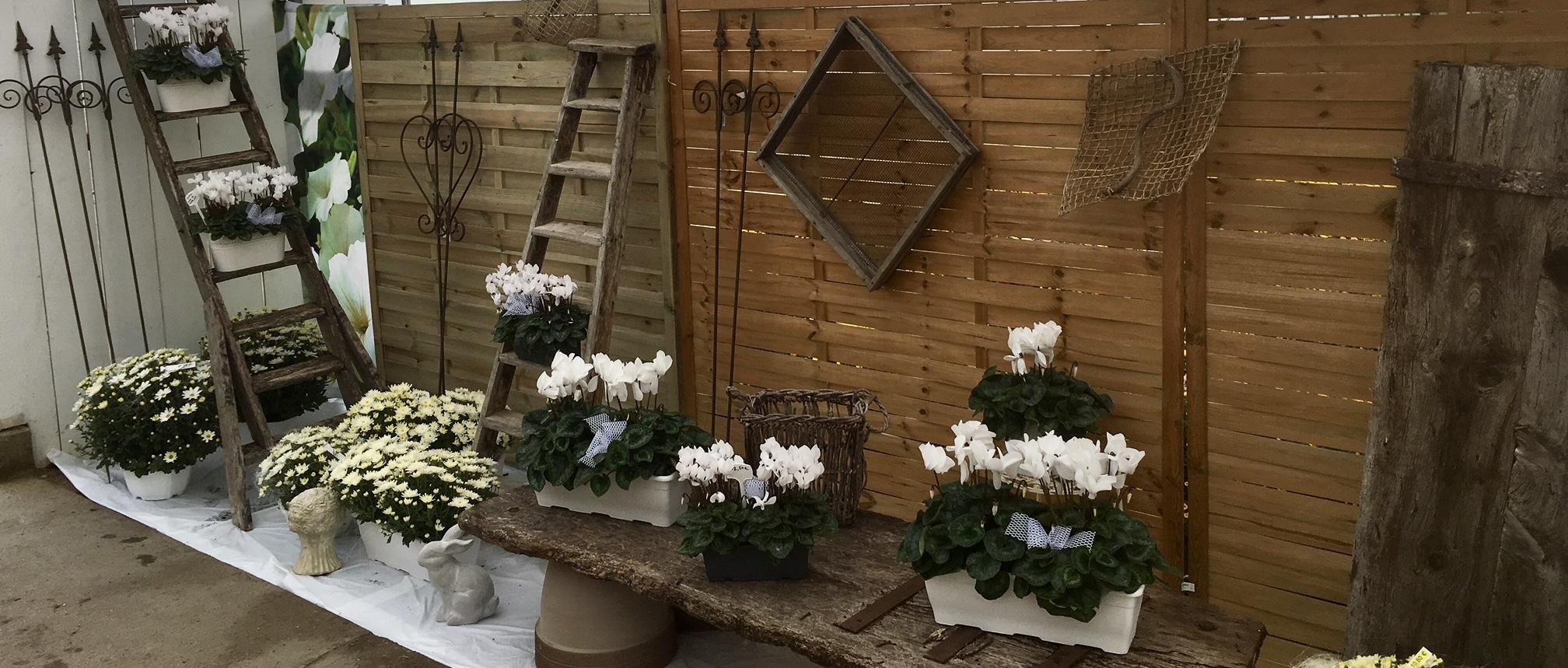 Horticulteur bourran magasin de plantes fleurs l gumes for Magasin de plantes