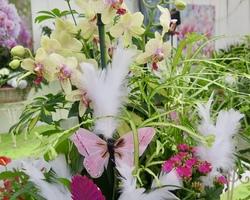 Les Serres de Monplaisir - Bourran - Cadeaux et compositions florales